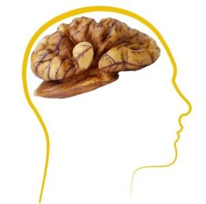 produkty-dlya-mozga