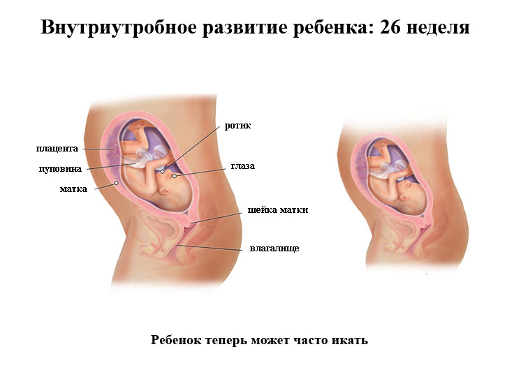 Позы для беременных в сексе 25 недель